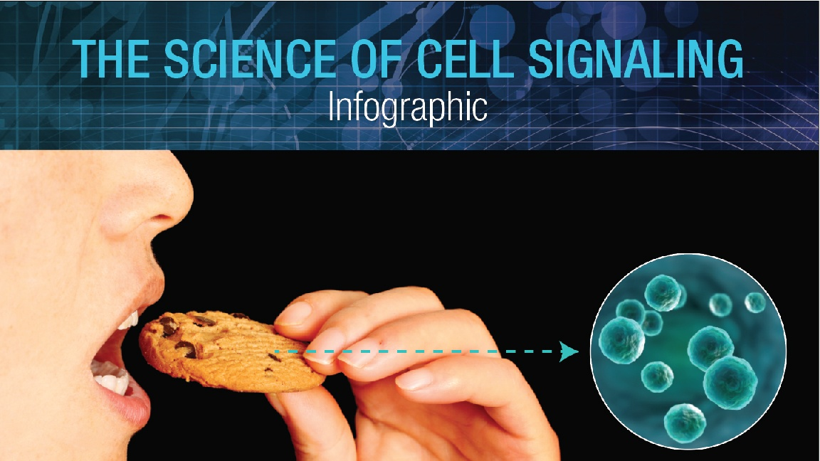 Cell Signaling Infographic Featured