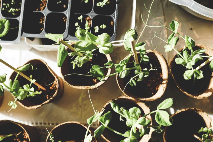 Gardening 101